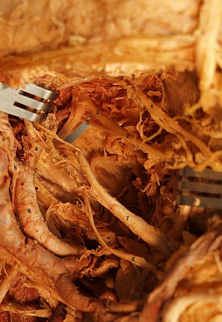egzamin praktyczny z anatomii